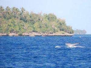 Fiji 4